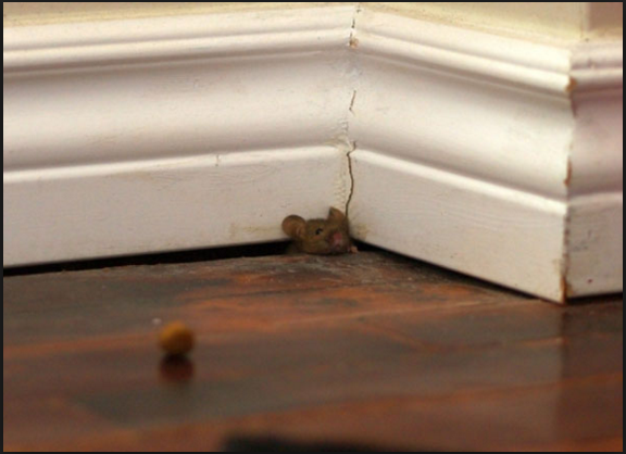 Have pests at home…you are not alone.