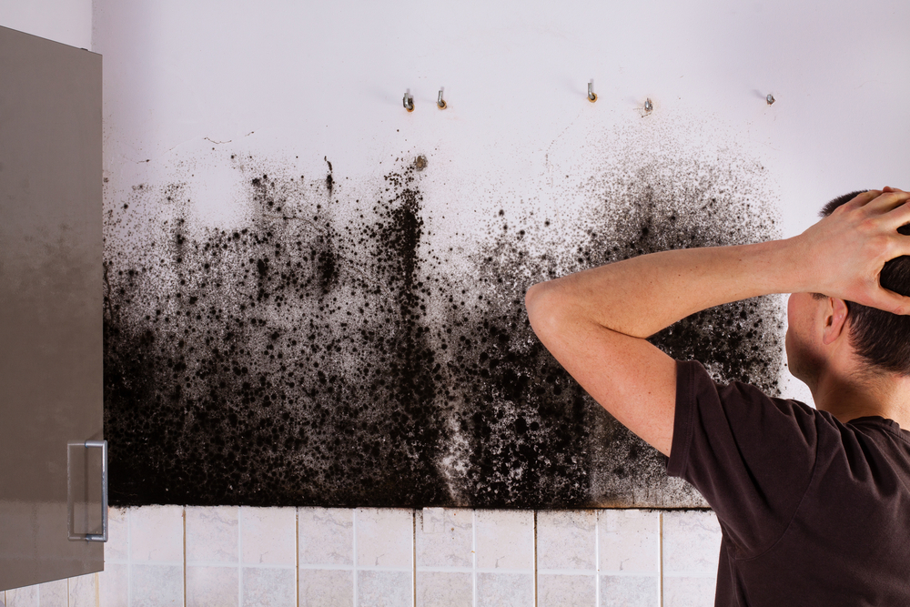 Mould Issues – UK's leading mould expert talks to Asktenants.co.uk