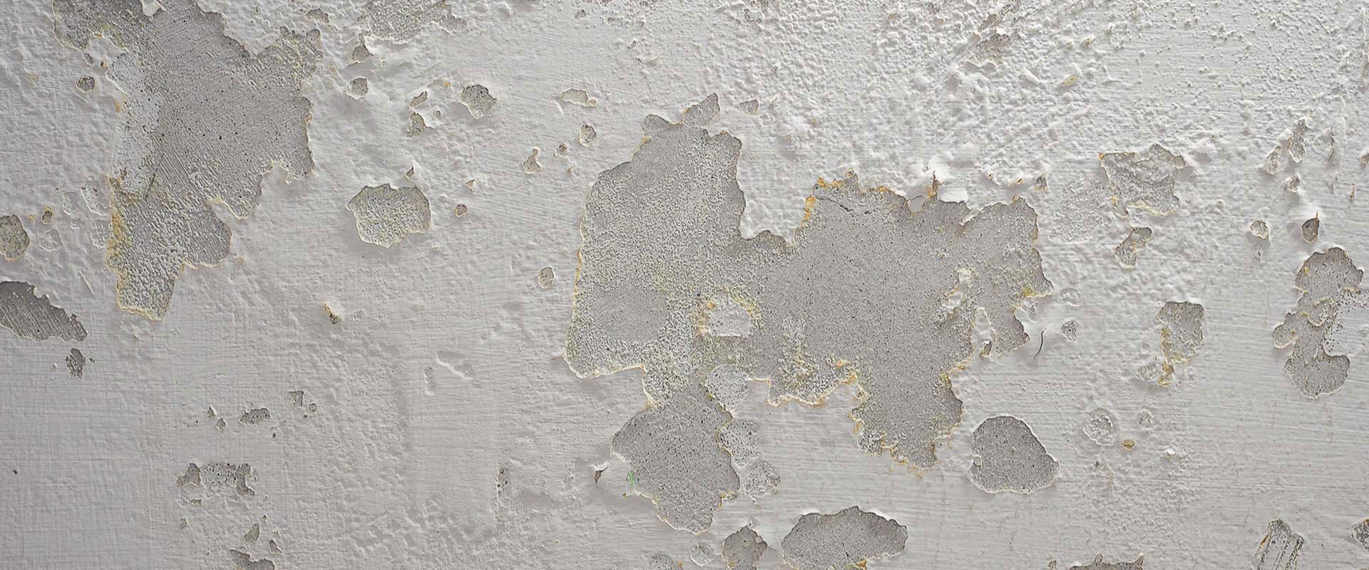Tenants' rights mould and damp